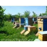 Пчелосемьи . с ульем (среднерусская)