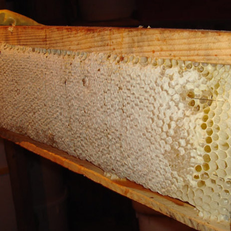 мёд  (соты)