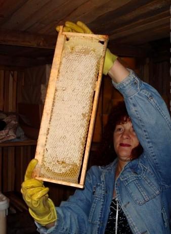 мёд в сотах. Ирина Владимировна просматривает медовые рамки