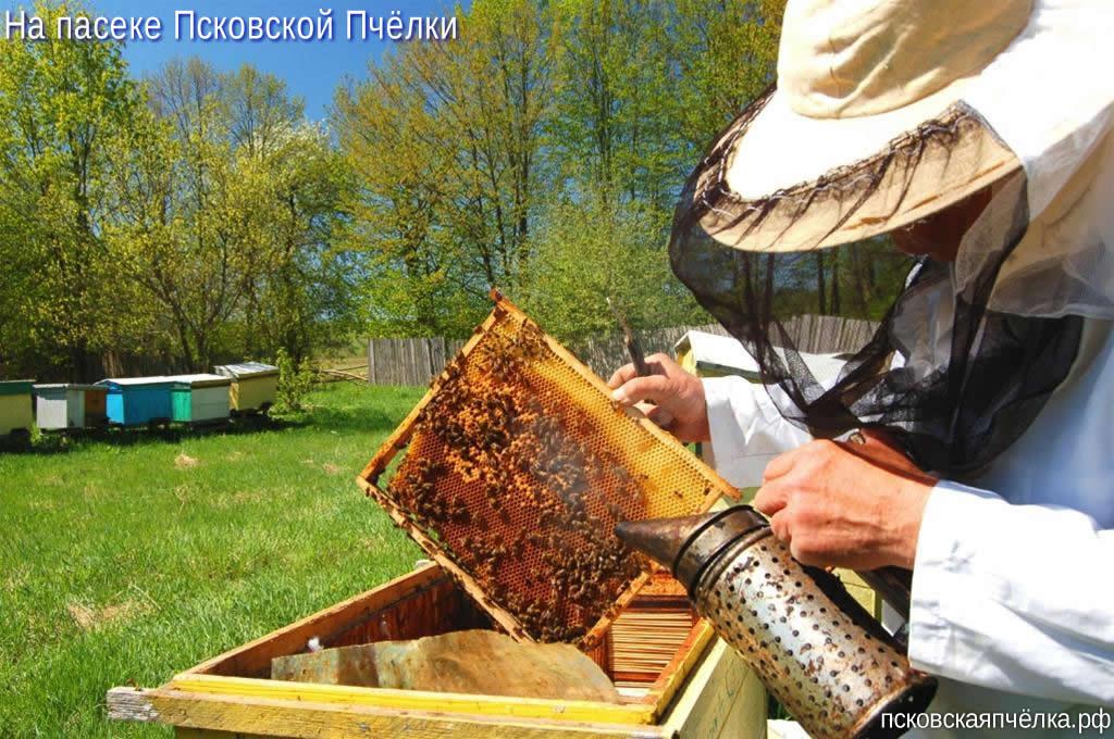 Пасека Харитоновых (мёд, перга, пыльца, продукты пчеловодства)