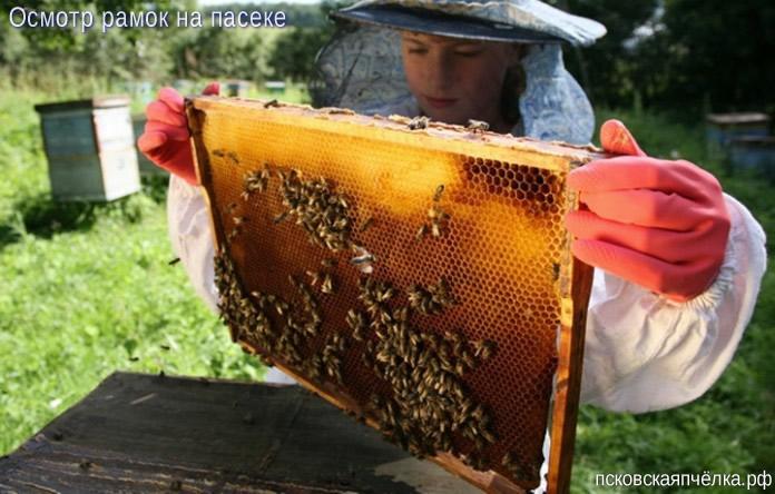 Качество продуктов пчеловодства нашей пасеки