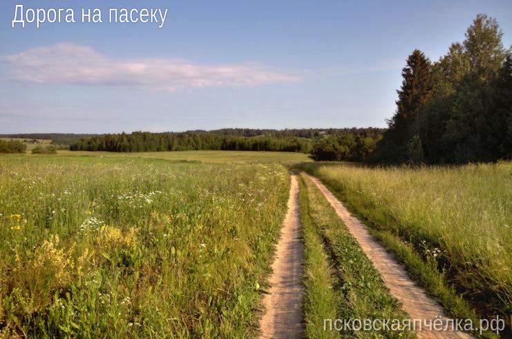 Дорога на пасеку (псковскаяпчёлка.рф)