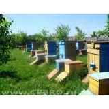 Пчелосемьи с ульем (среднерусская)